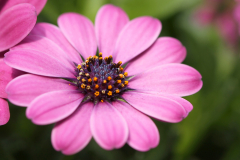 flowers_007